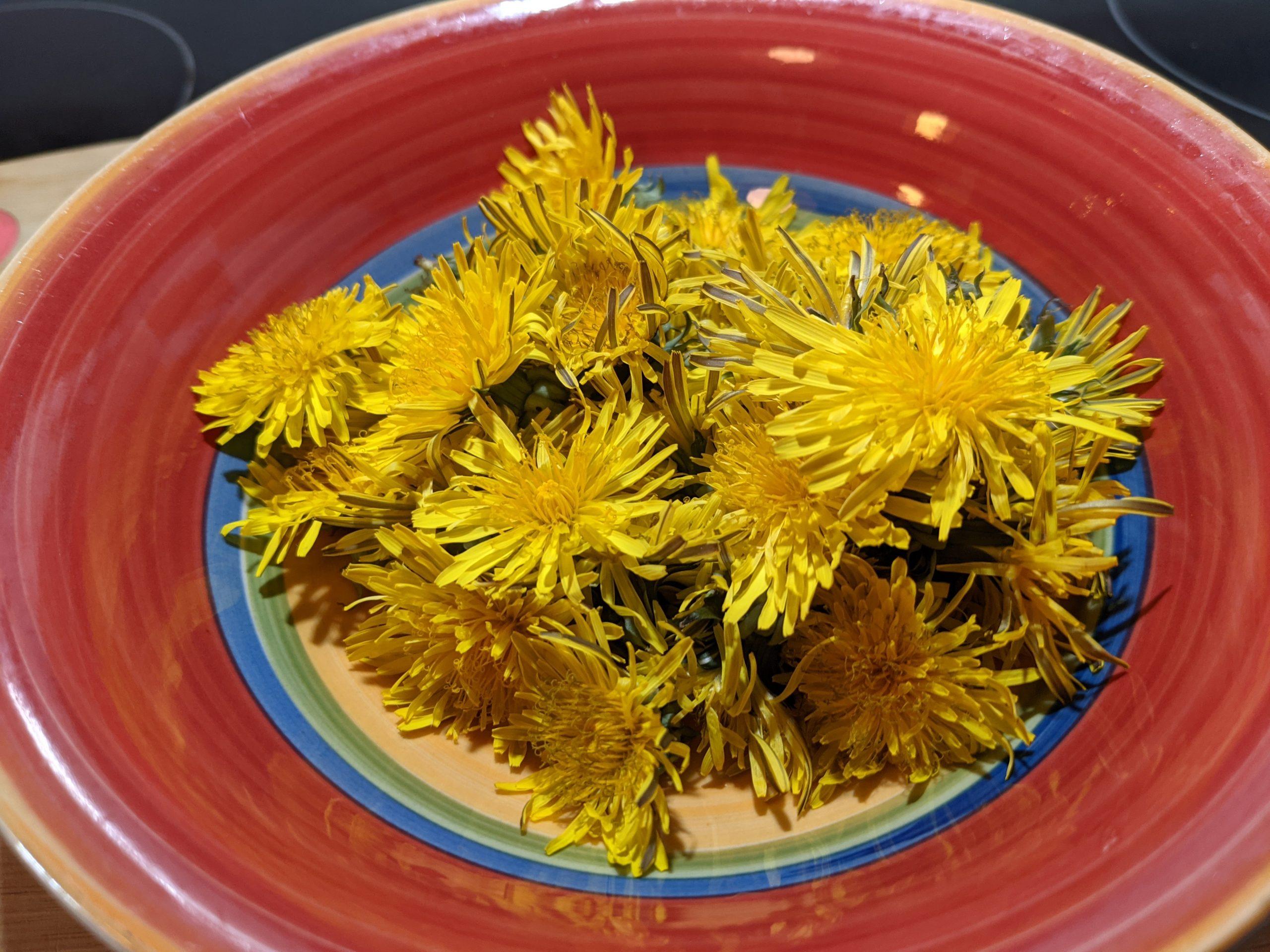 Honey Whole Wheat Dandelion Rhubarb Muffins
