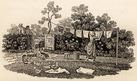 Hanging_Washing_with_Pigs_and_Chickens_tail-piece_in_Bewick_British_Birds_1797