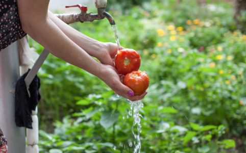 Water From New Pipes Washing Tomatoes Grown With That Water in Ditavan Village_WilliamBairamian.me