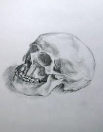 Vanitas Study, 2007