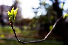 Spring Buds (7 of 14)