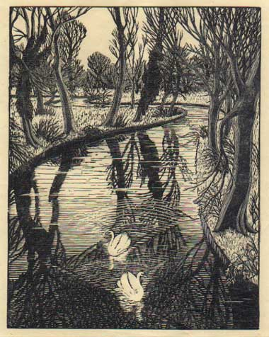 Swans (colour wood engraving, Gwen Raverat)