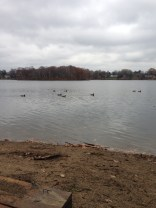 Ducks saw us