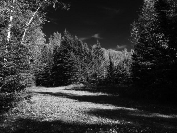 Darkening Fields