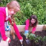 Planting the seedlings