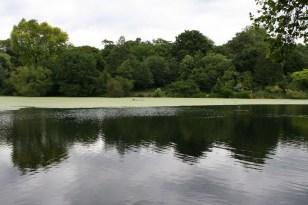 Hampstead_Ponds_(171329664)