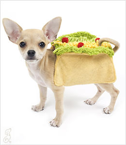 A chihuahua and a taco may be a bit stereotypical but admit it This combo is darned cute. If youu0027d like to purchase one for your own little jumping bean ... & Dogs in International Costumes: Bone Voyage! | Will My Dog Hate Me?