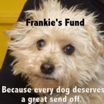 Frankie for blog-004