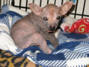 Claire of Blind Dog Rescue -- before