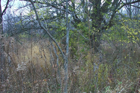 The author, standing in the center of the picture, is wearing standard camouflage and a ghillie headnet to demonstrate the effectiveness of ghillie-type camouflage.