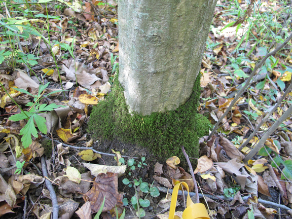 Moss growing all the way around a tree: Photo by Creek Stewart