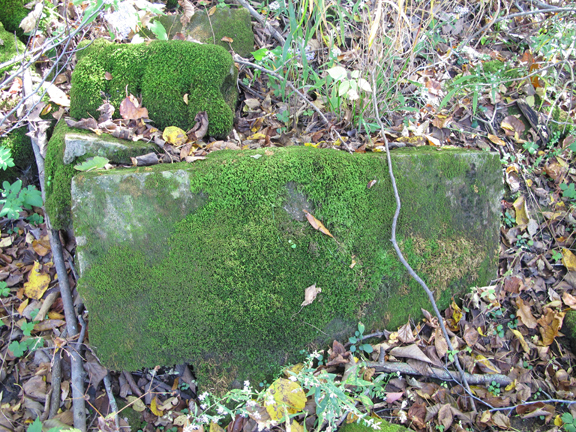 Moss on remnants of a rock wall: Photo by Creek Stewart