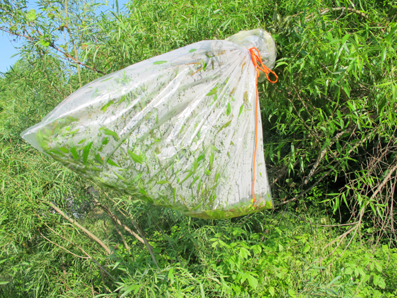transpiration-bag