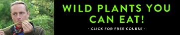Learn how to identify wild edible plants.