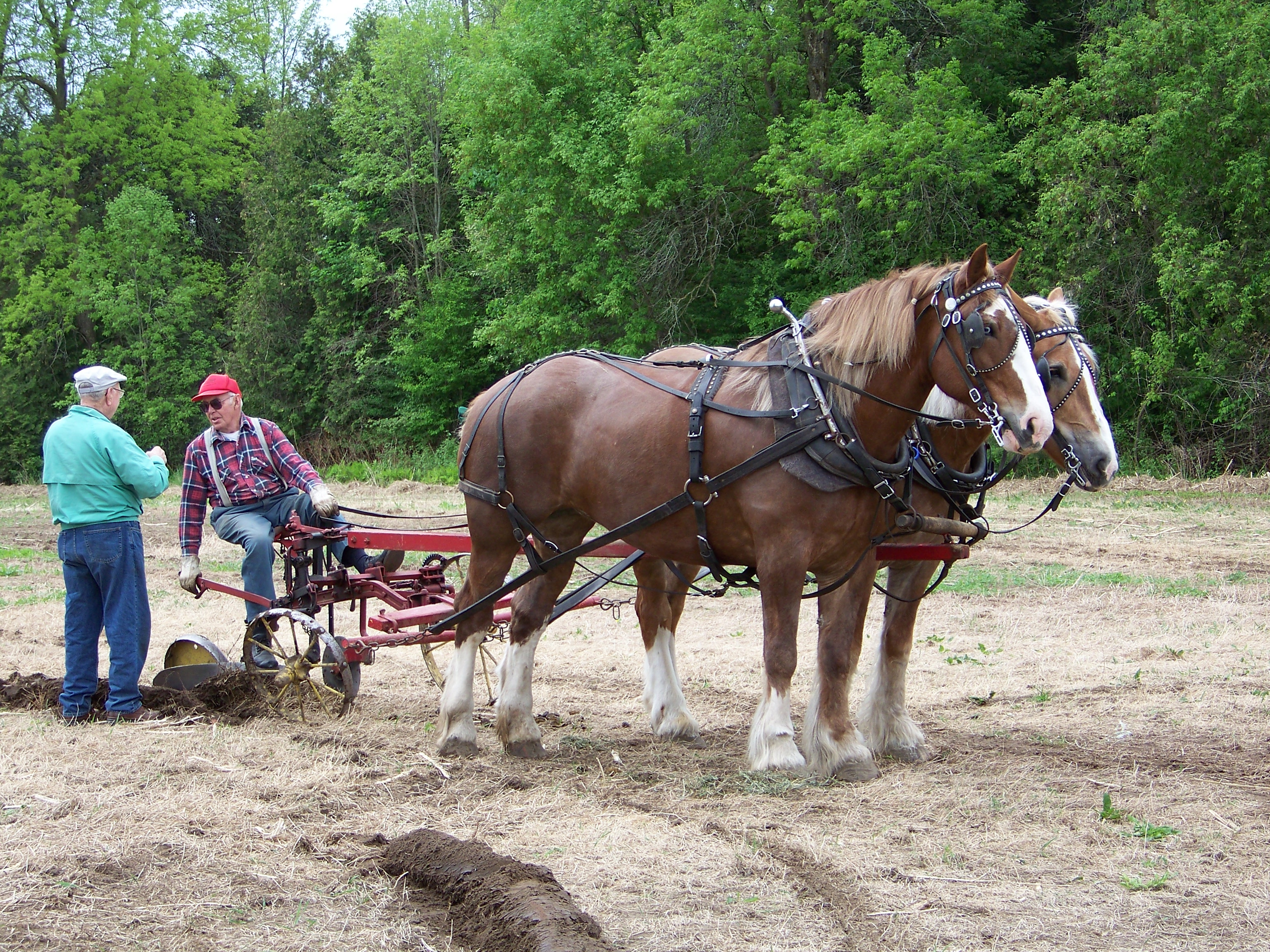 Single furrow seated plow
