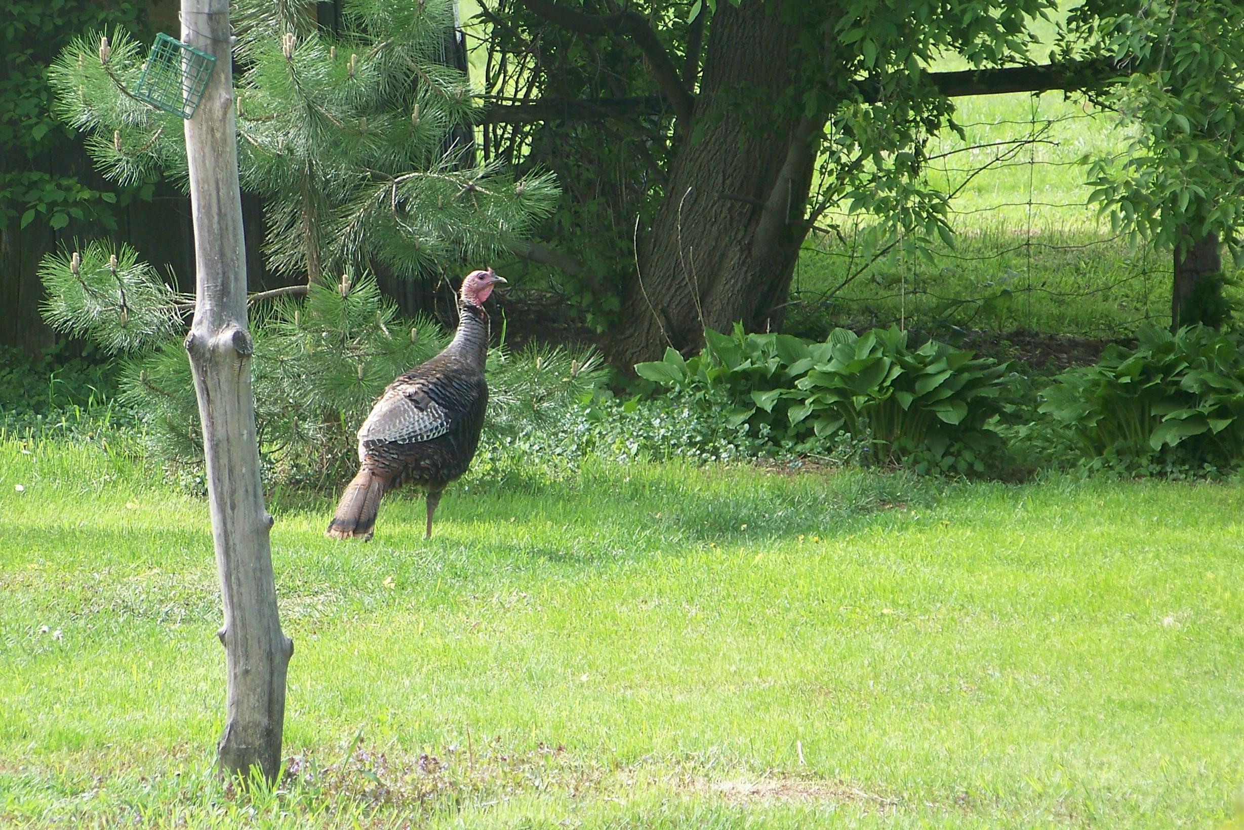 turkeyleaving