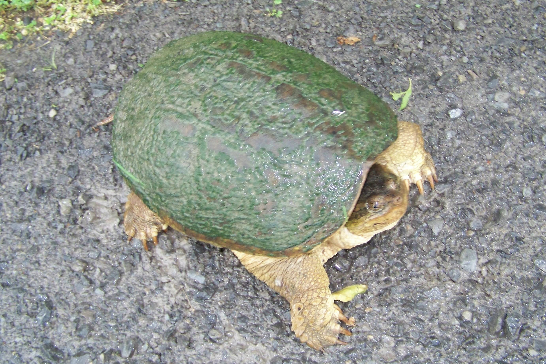turtleondriveway