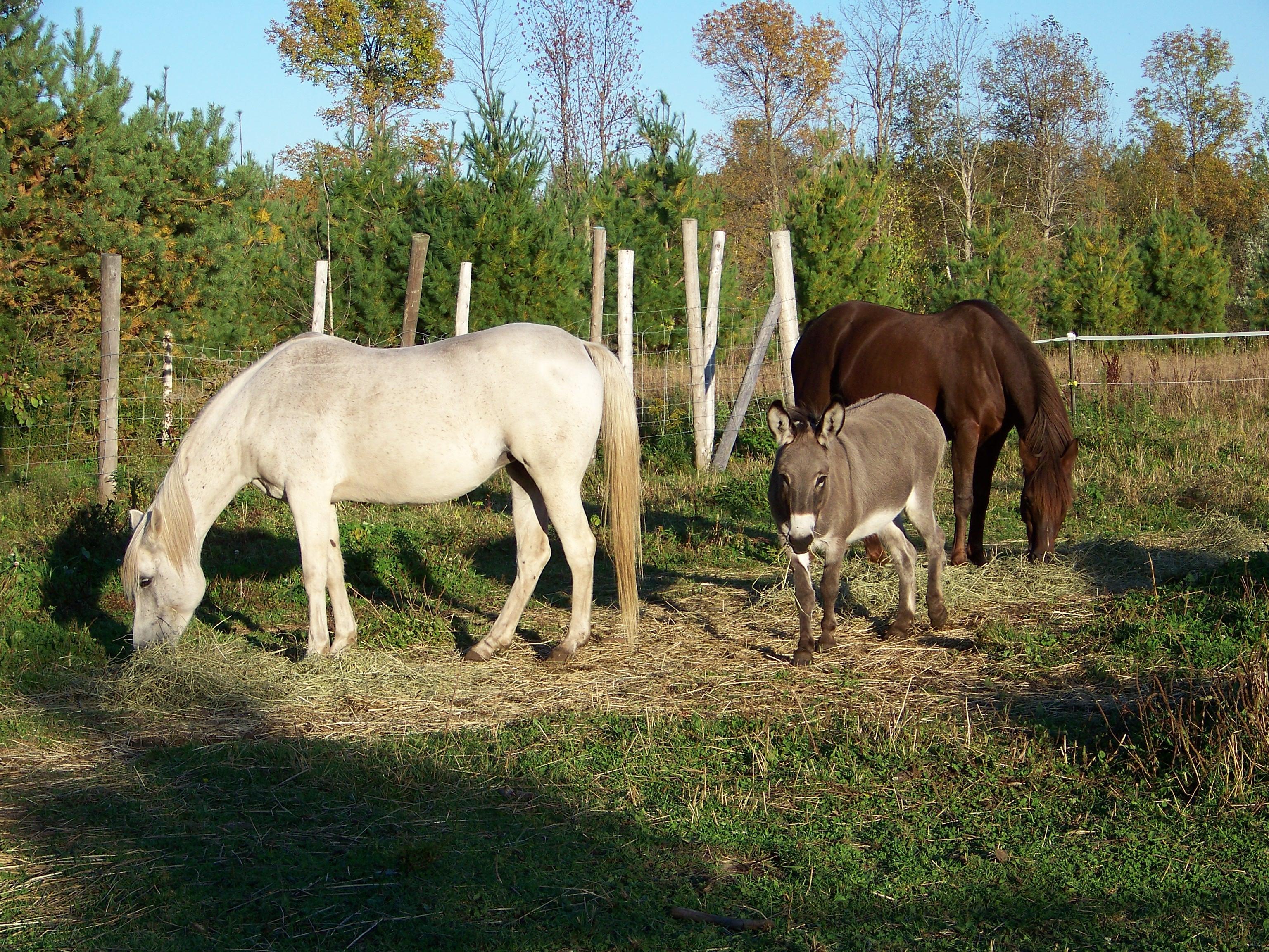 walkhorses