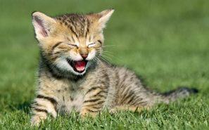 Cute-Kitten-kittens-16123158-1280-800