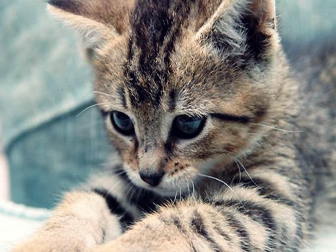 Cute-kitten-cute-kittens-18565723-1024-768