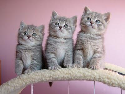 cute-little-kittens