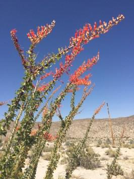 More cactus flowers