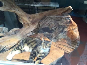 Schaufenster-Kitty #1