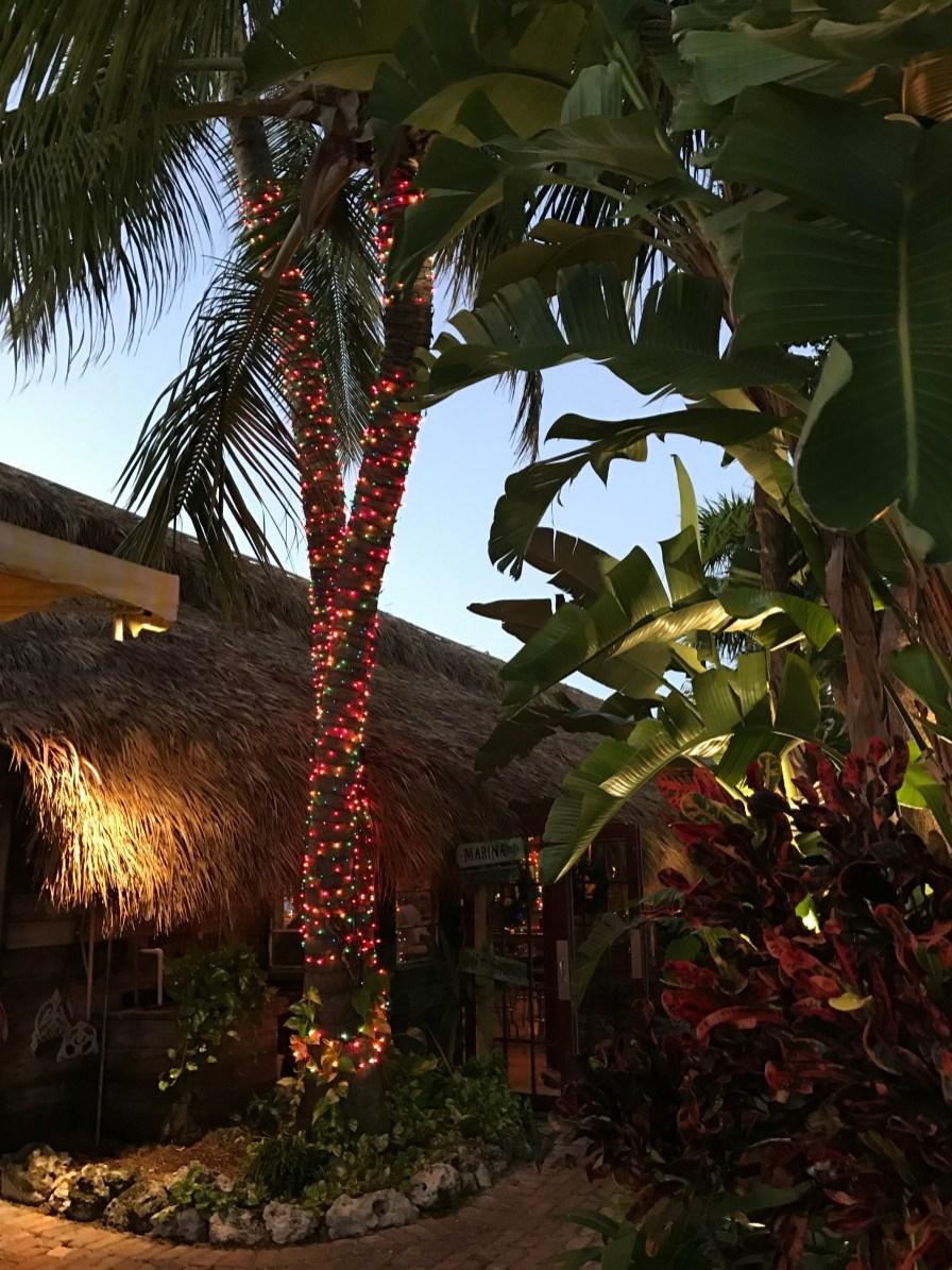 Oh Christmas (Palm) Tree...