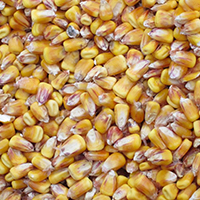 cornkernels_200
