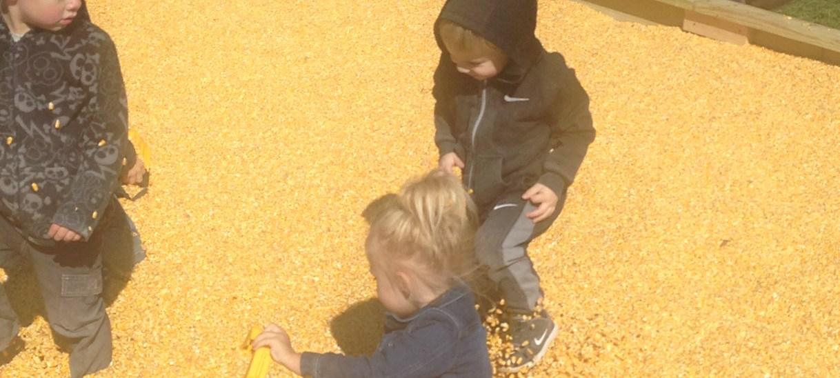 Corn Pool