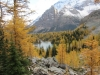The beauty of the larch and Lake Schaffer