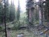 Trail through the trees avi gully ahead