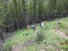 Thining trees as we near the ridge