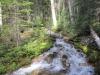 Stream crosses the trail