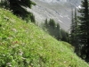 Flowers on Avalanche slopes