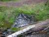 Spring water emerges from the ground
