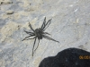 A big spider on a rock