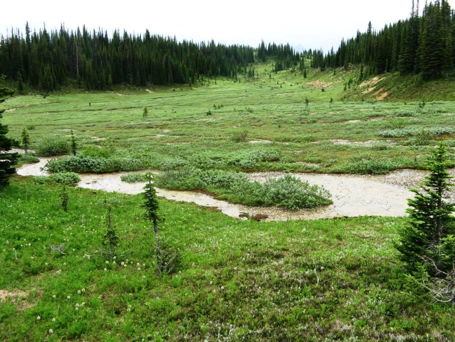 Meadows above Celeste Lake