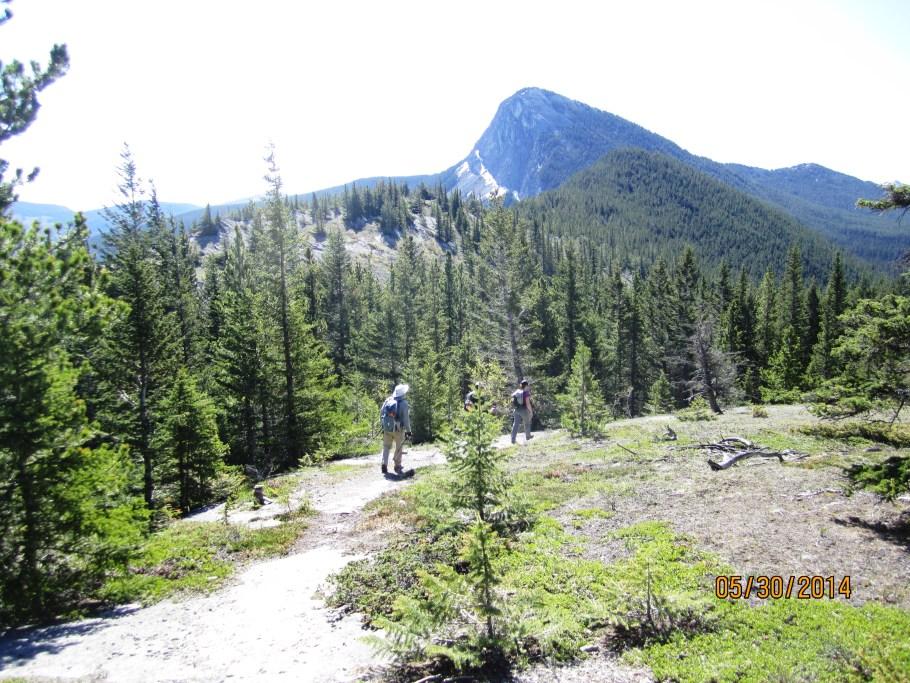 Open ridge  meadow & Yates Mt