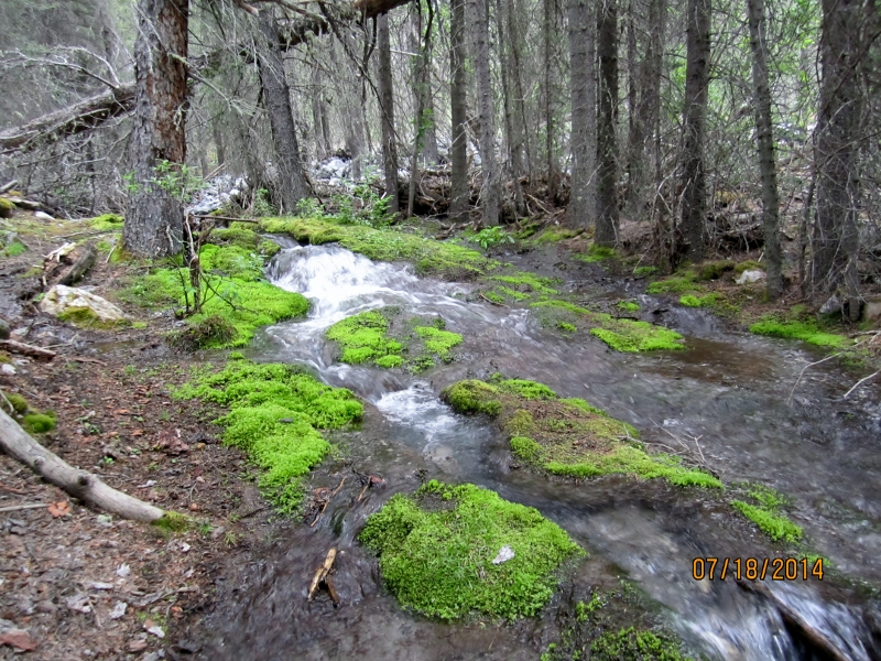 Strange florescent green moss in stream  at start of trail