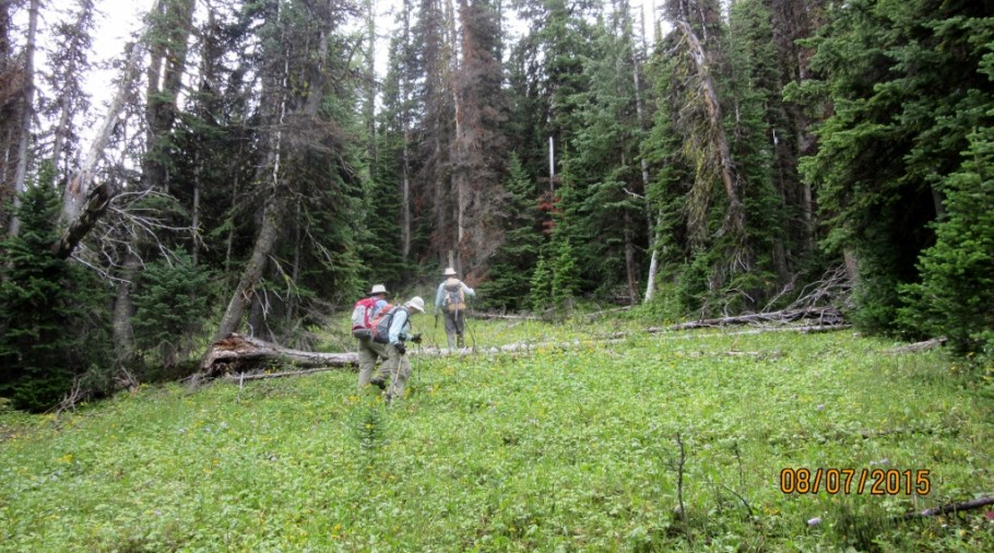 Nearly out of the woods after bushwhacking up to the ridge