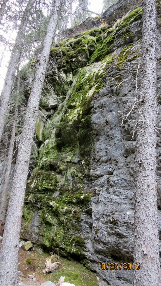 Moss wall near the rock climbing wall