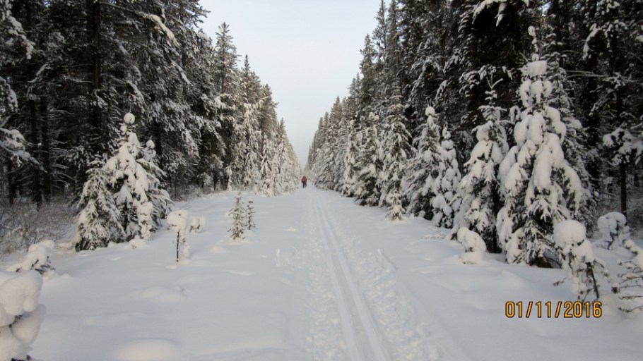 The narrow trail through the trees
