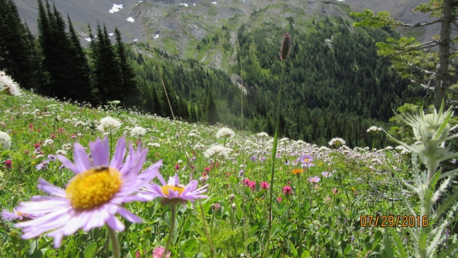 Wild Flowers on avalanche slopes