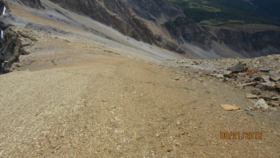 Some one snaked up the soft scree we bounded down.