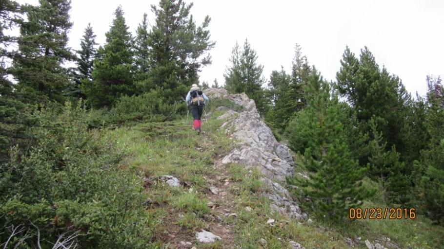 Clearing the trees Lineham Ridge
