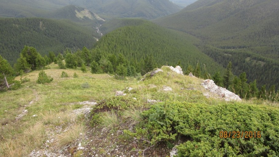 Looking down at the long tree section.