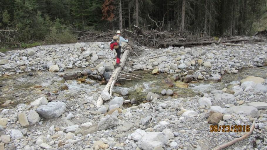 Crossing Lineham Creek