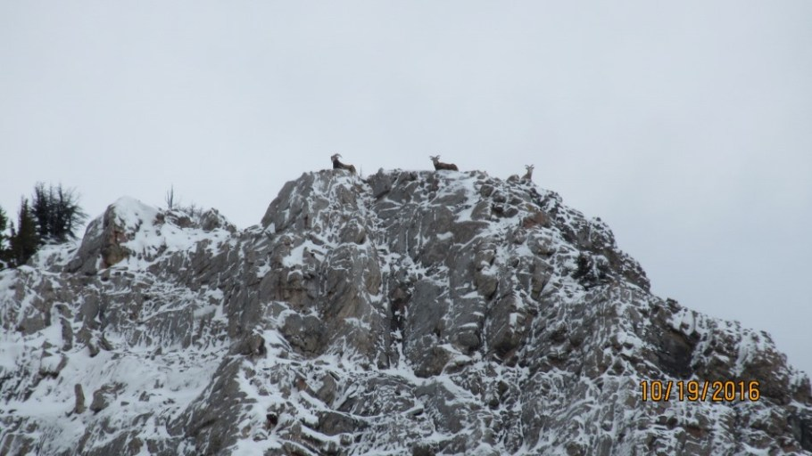 This is the goats high point .They stayed up there all afternoon