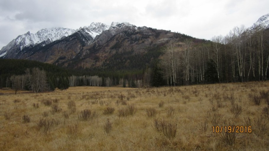 In the meadow looking back at Mt Ishbel Shoulder
